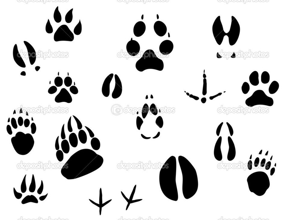 Animal footprints clip art