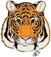 drawn portrait of a tiger