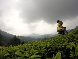 family tea plantation