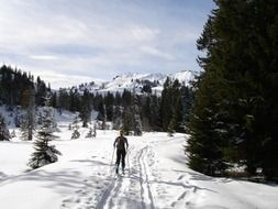 ski tour in forest
