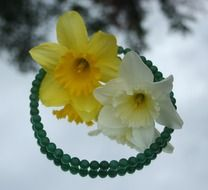 daffodils lie on a necklace