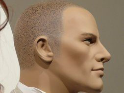 Male mannequin's face in profile