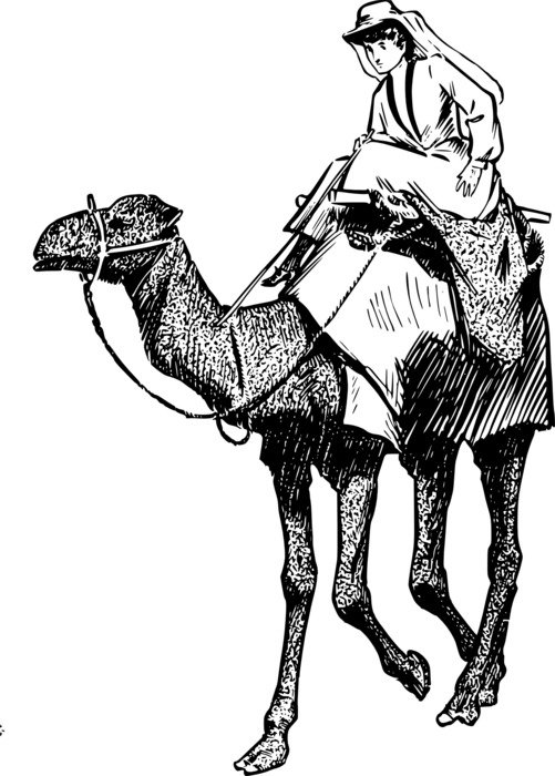 graphic image of a woman on a camel