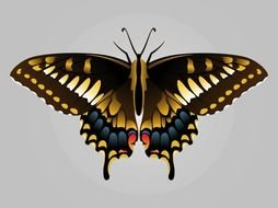 nice Butterfly Image drawing