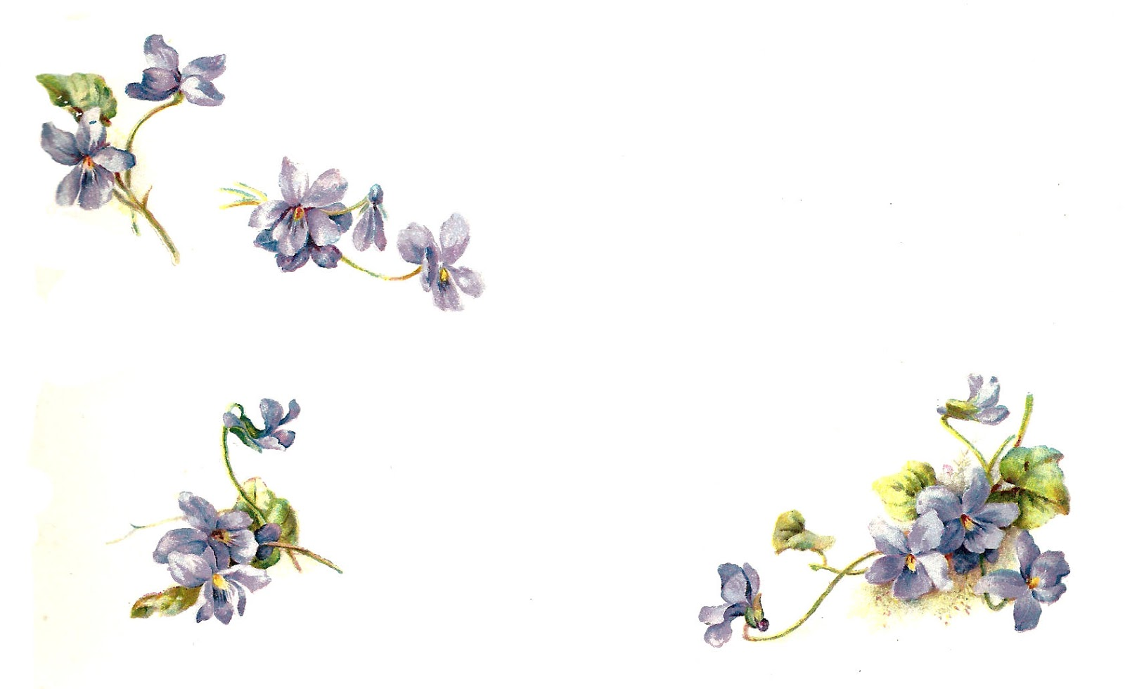 photograph relating to Free Printable Flower Borders called No cost Printable Flower Borders Clip Artwork N3 free of charge picture