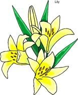 drawing of a yellow lily with green leaves