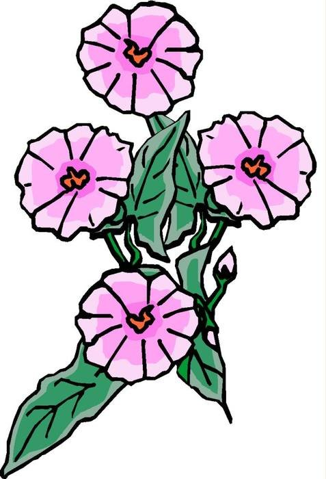 Purple pink Flower drawing