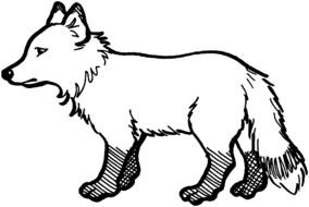 Arctic Fox Coloring Pages drawing