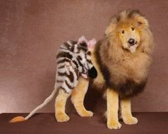 Extreme Dog Grooming toy
