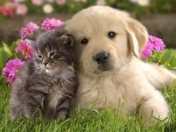 sweet kitten and puppy