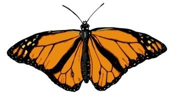 big orange monarch butterfly drawing