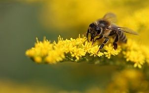 Detailed photo of bee on a yellow plant