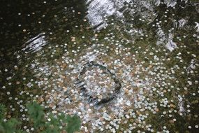 A lot of coins under the water