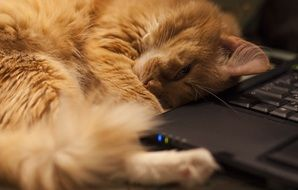 cat napping near a laptop