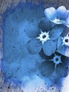 forget-me-nots on vintage card