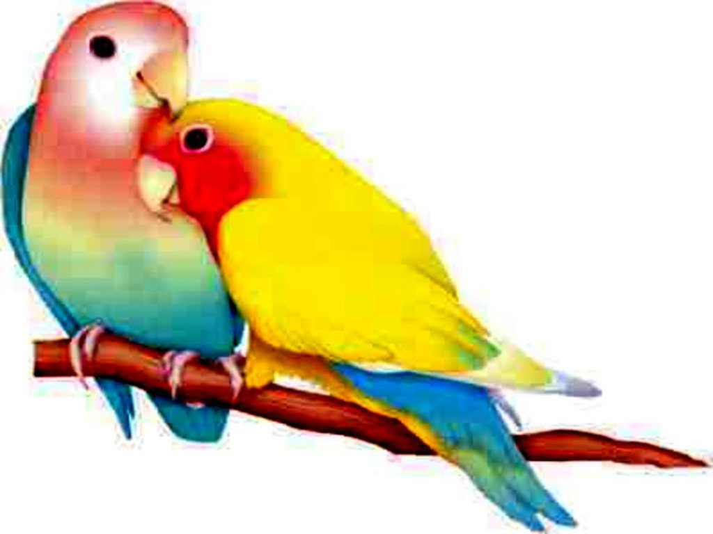 Couple Of Colorful Love Birds Drawing Free Image