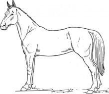 tags ausmalbilder pferde bilder zum ausmalen malvorlagen free image
