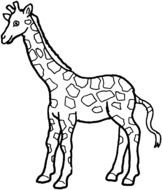 Giraffe as a graphic illustration