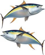 two tuna as illustration