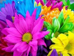 beautiful flowers of different colors