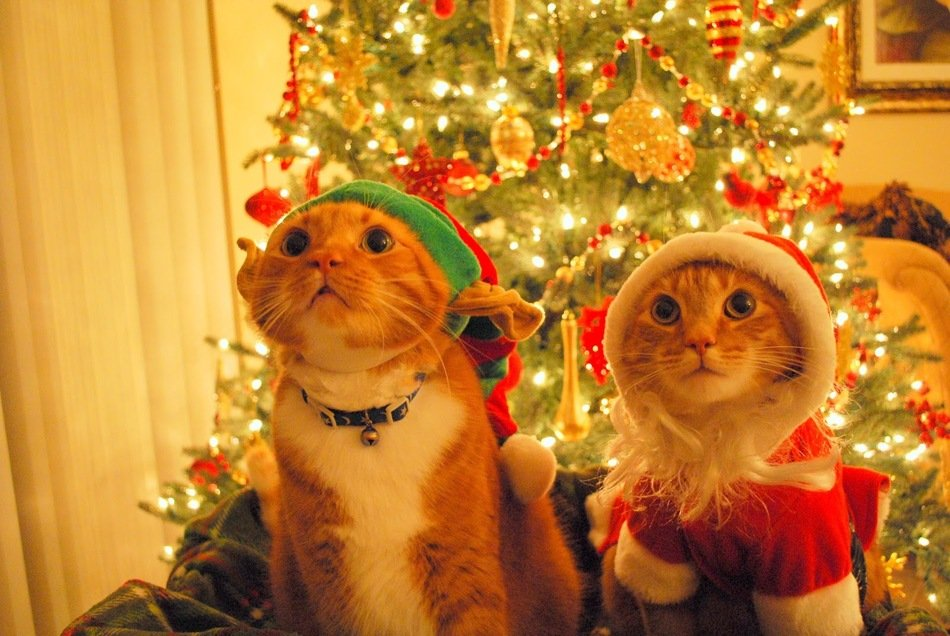 cats near the christmas tree as a picture for clipart