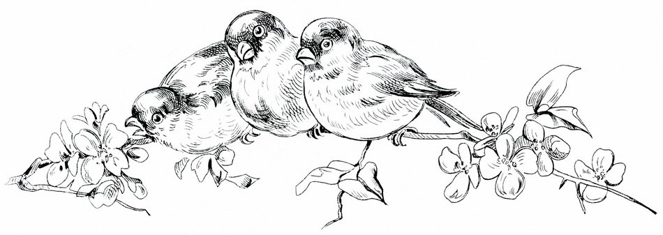 drawing of the black and white birds