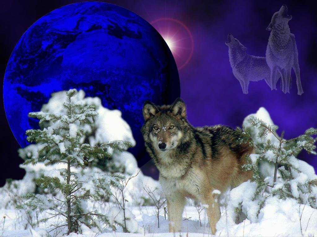 Wolves And The Moon As A Mystical Plot Free Image