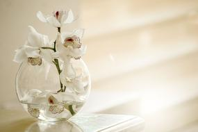 white orchid in vase