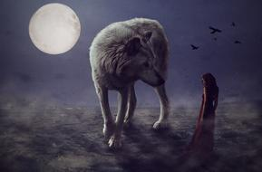 lonely Wolf at full moon night, digital art