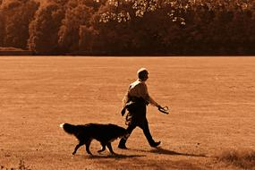person and Dog walking on lawn at evening