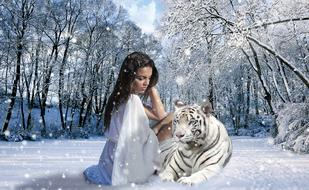 Woman sits near white Tiger on Snow, collage