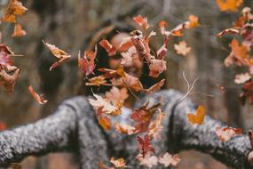 fallen leaves in air in front of girl