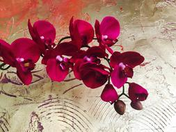 red Orchid Flowers at abstract background