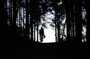 cyclist in the dark forest