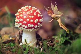 mystical image of a fly agaric and a fairy tale
