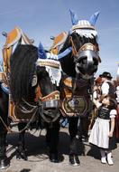 child girl with pair of black horses on octoberfest parade