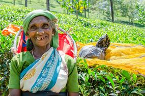 photo of an old woman at a tea plantation in Sri Lanka