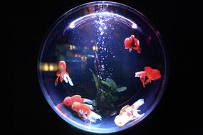 Fish Bowl Glass red