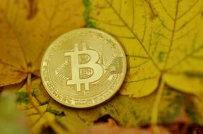 Bitcoin Cryptocurrency Coins gold yellow