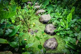 Stepping Stones green plant