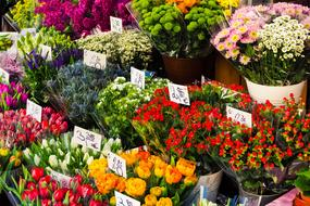 bunches of Cut Flowers for sale