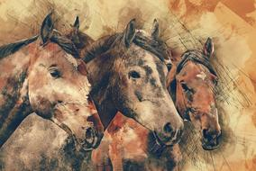 horses head animals drawing