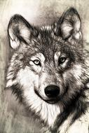 portrait of a wolf head