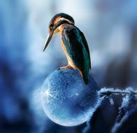 Kingfisher Bird blue ball