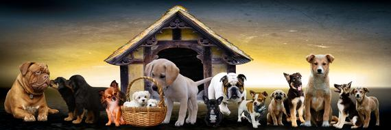 photo of different breeds of dogs on the background of the house