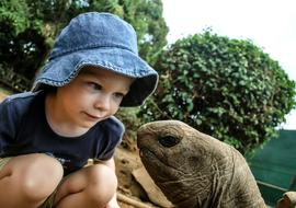 small Boy and Turtle