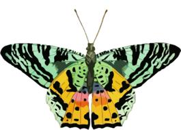 butterfly clip art colorful drawing