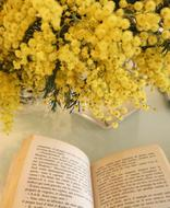 Mimosa yellow and Book