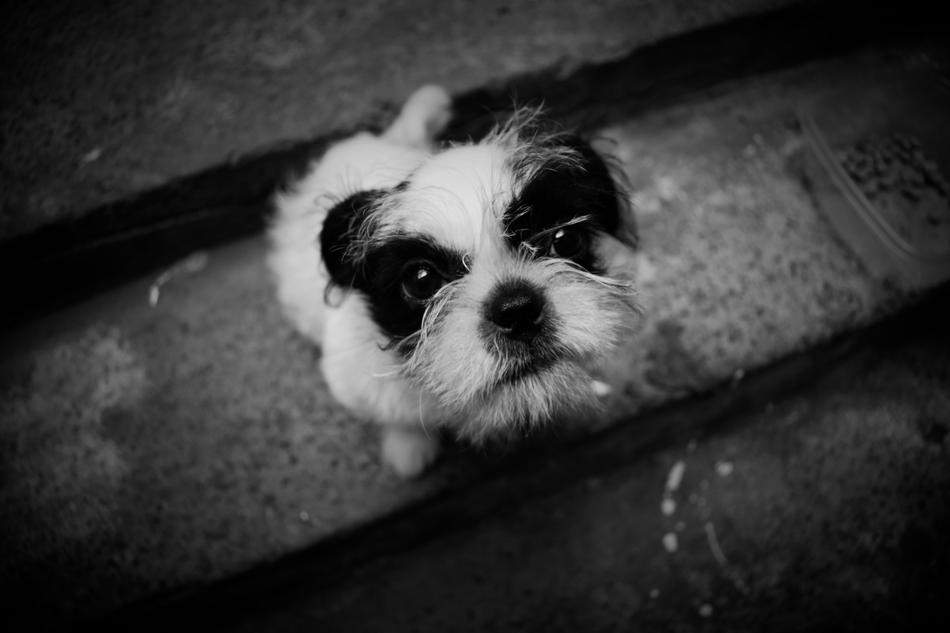 cute Dog black and white photo