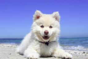 white puppy on the beach on a sunny day